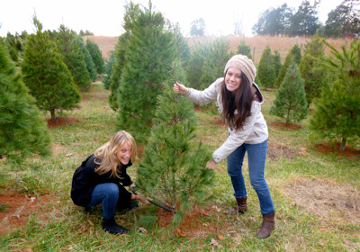 Cutting Christmas Tree at Evergreen Tree Farm