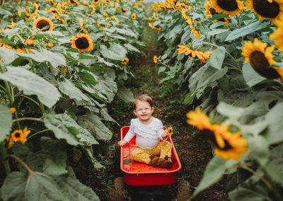 baby in wagon in field of sunflowers