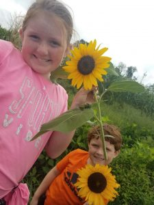kids picking sunflowers