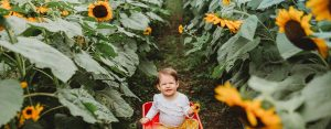 Baby in a wagon in a field of sunflowers - 1420x556