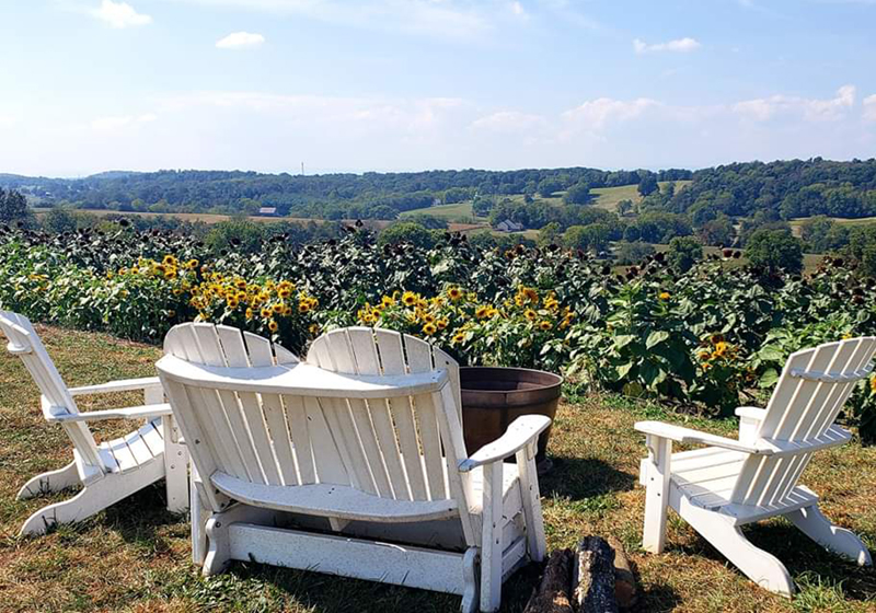 Adirondak chairs with a beautiful view of our sunflower field